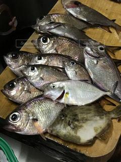 魚の群れ - No.1018173