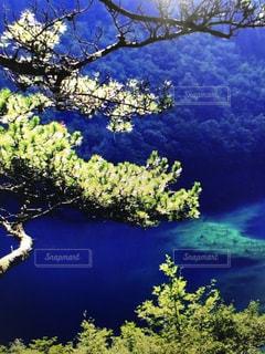 近くに水に囲まれたツリーのアップの写真・画像素材[1018956]