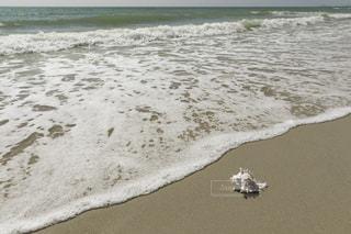 砂浜の貝殻の写真・画像素材[1026797]