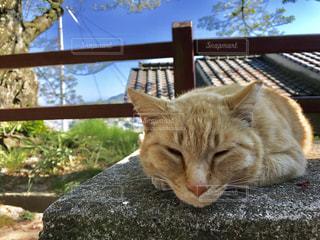 ベンチで寝るネコの写真・画像素材[1018898]