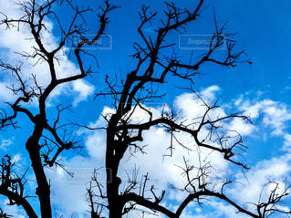 冬空の写真・画像素材[1018933]