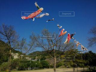 空を泳ぐ鯉のぼりの写真・画像素材[1022203]