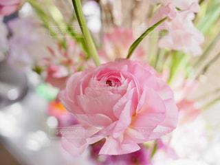 ピンクの薔薇の写真・画像素材[1025150]