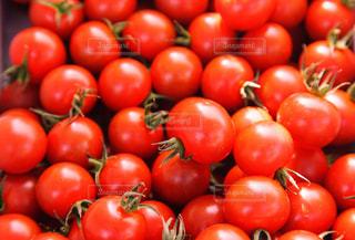 プチトマトの写真・画像素材[1179774]