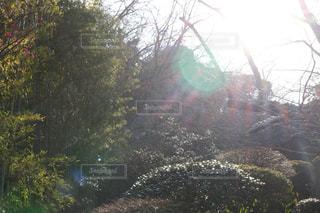 茂みや木のグループの写真・画像素材[1036023]