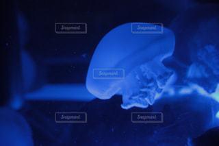 クラゲのアップの写真・画像素材[1019286]
