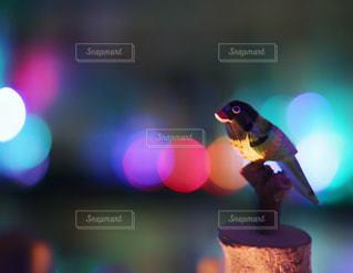 木の鳥の写真・画像素材[1046362]