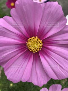 花の写真・画像素材[1476408]