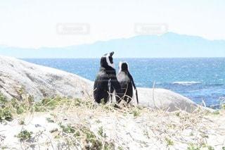 野生動物の写真・画像素材[76126]