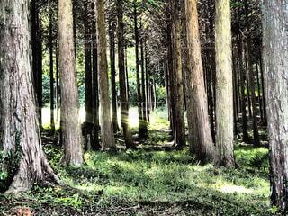 森の中の木の写真・画像素材[1021030]