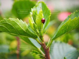 近くの緑の植物をの写真・画像素材[1021049]