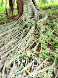 森の中の緑の植物の写真・画像素材[1021187]
