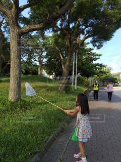 公園で網を保持している小さな女の子の写真・画像素材[1023107]