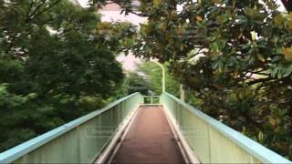 歩道橋の上の写真・画像素材[1021104]
