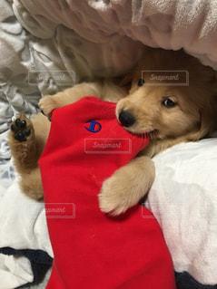 ベッドの上に横たわる犬 - No.1021600
