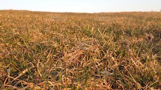 近くに乾いた草のフィールドのの写真・画像素材[1021425]