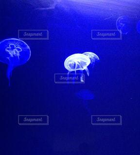 クラゲの写真・画像素材[1021469]