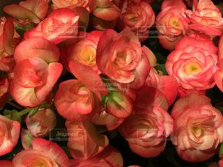 近くの花のアップの写真・画像素材[1021479]