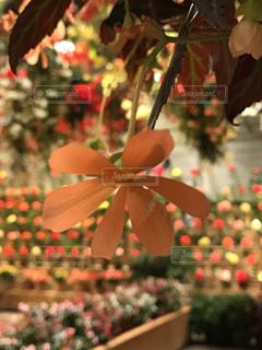花の写真・画像素材[1021482]