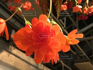 近くの花のアップの写真・画像素材[1021486]