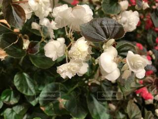 近くの花のアップの写真・画像素材[1021489]