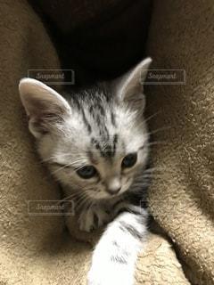 かわいい子猫 - No.1021501