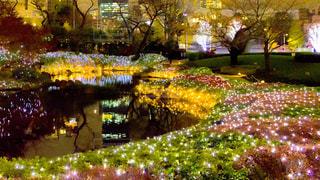 庭園のイルミネーションの写真・画像素材[1024854]