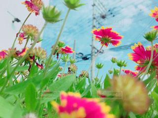 近くの花のアップの写真・画像素材[1022043]