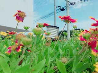 色とりどりの花のグループの写真・画像素材[1022044]