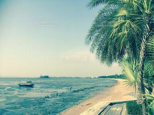 ヤシの木とビーチの写真・画像素材[1021637]