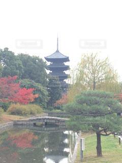 京都東寺の写真・画像素材[1021933]