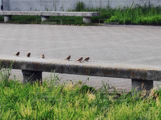 水の体の横にあるベンチに座って鳥の群れの写真・画像素材[1022336]