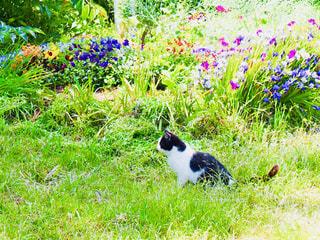 野原と猫の写真・画像素材[1241465]