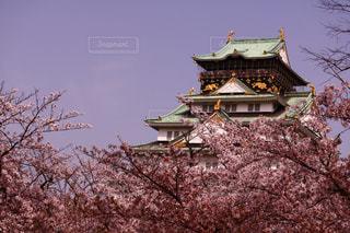 春の大阪城の写真・画像素材[1113505]
