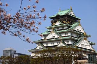 春の大阪城の写真・画像素材[1113507]