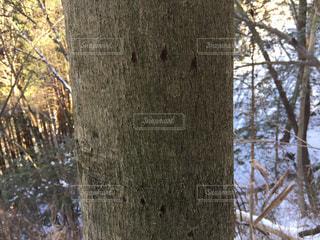 爪痕の写真・画像素材[1021846]