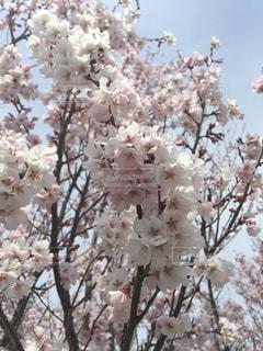 近くの花のアップの写真・画像素材[1087618]