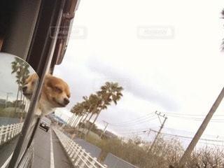 犬の写真・画像素材[35621]