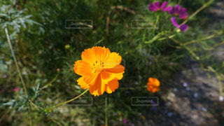黄色の花 - No.1022084