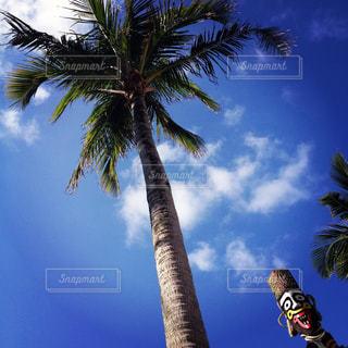 ヤシの木の写真・画像素材[1022055]
