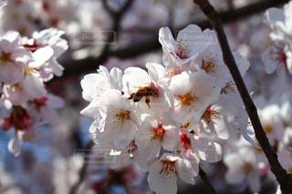 近くの花のアップの写真・画像素材[1022458]