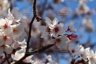 近くの花のアップの写真・画像素材[1022459]