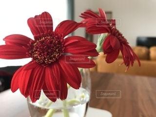 テーブルの上の花の写真・画像素材[2717163]