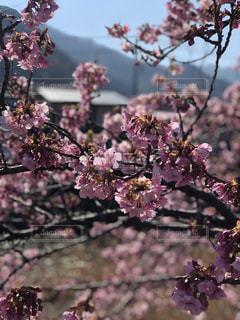 近くの植物に紫の花のアップ - No.1022419