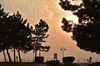 松と自転車と夕日との写真・画像素材[1022429]