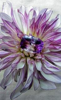 紫の花と石の写真・画像素材[2252218]