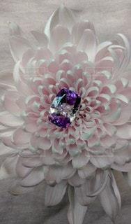 花のベッドと石の写真・画像素材[2252219]