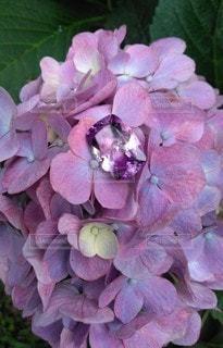 紫陽花と宝石の写真・画像素材[2272392]