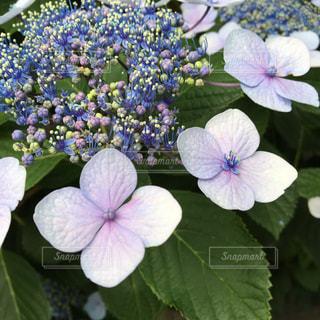 花の写真・画像素材[153370]
