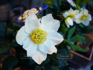 近くの花のアップの写真・画像素材[1022673]